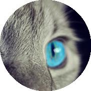 Œil de chat