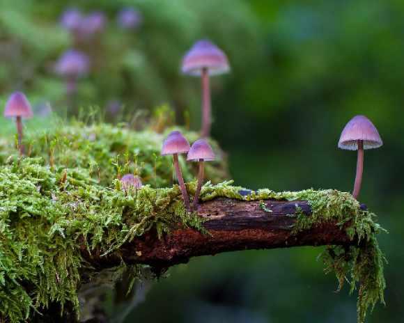 Etudiez dans un environnement nature