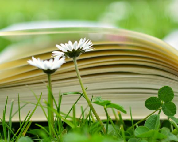 Fleurs et livre ouvert