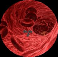Sciences fondamentales-Anatomie-Physiologie