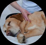 Techniques manuelles pour animaux
